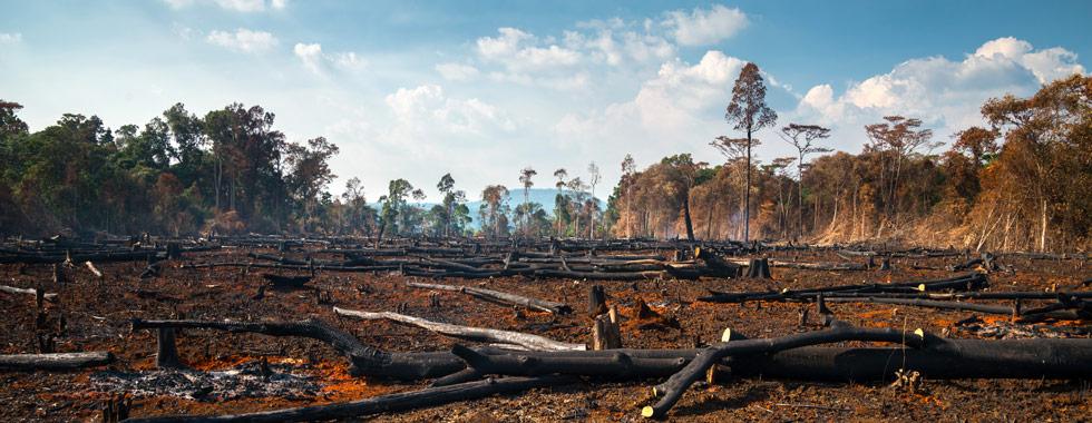 Rohdung von Regenwaldwäldern möchte ZEOTTEXX entgegenwirken