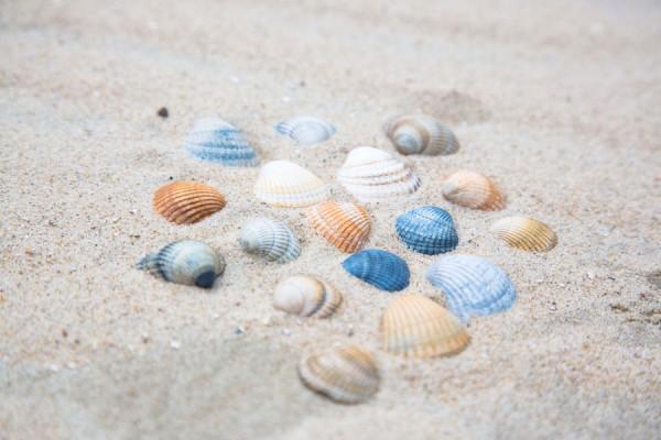 Bunte Muscheln im Sand