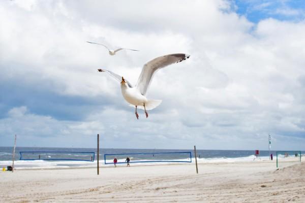Möwen an der Küste